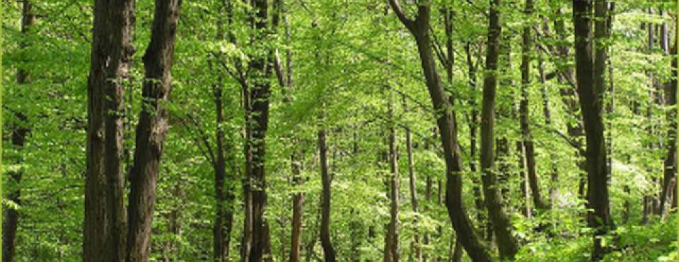 KLOPI: za bolj varen sprehod po gozdu v toplih mesecih